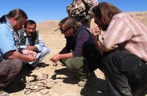 Archeologinio Afganistano paveldo atradimai