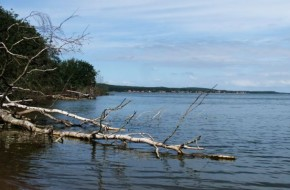 Nida – Preila pėsčiomis per Bulvikio Įlanką