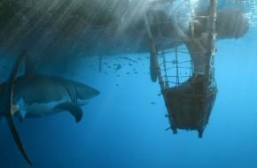 """Norvegų istorinis filmas apie """"Kon Tiki"""" ekspediciją"""