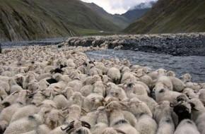 Gruzijos piemenys