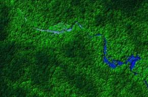 """Hondūro džiunglėse rastas legendinis """"Aukso miestas""""?"""