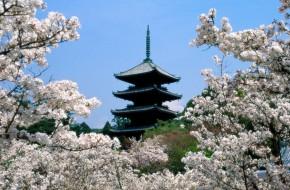 "Penktasis japonų kultūros festivalis ""nowJapan"""