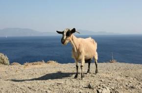 Trijų dienų kelionė į Koso salą